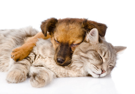 cat and dog sleeping together  isolated on white
