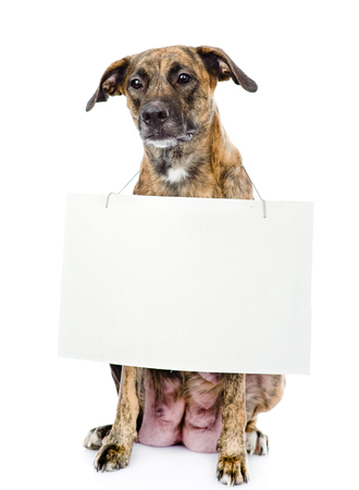 dog with a blank banner hung on the neck  isolated on white