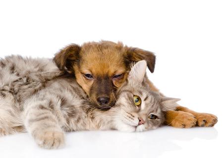 cat and dog sleeping  isolated on white background