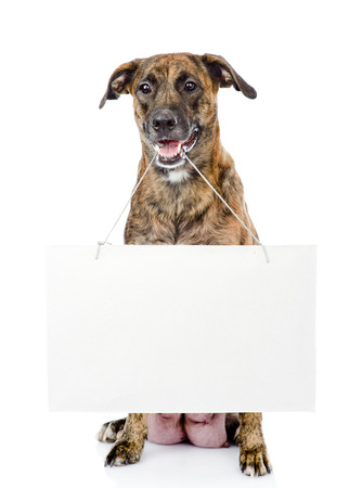 Dog with empty cardboard  isolated on white background