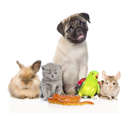 large group of pets along. Isolated on white background