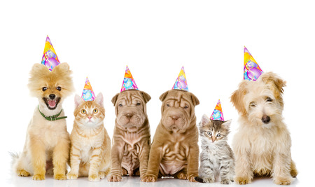 Group of cats and dogs with birthday hats. isolated on white background