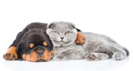 Rottweiler puppy embracing cute kitten. Isolated on white background.