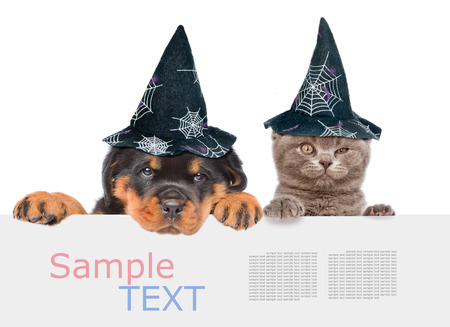 Cat and Dog with hats for halloween peeking from behind empty board and looking at camera. isolated on white background.