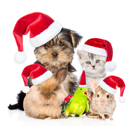 Photo pour Large group of pets in red christmas hats. isolated on white background. - image libre de droit
