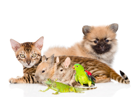 group of domestic animals. Isolated on white background.