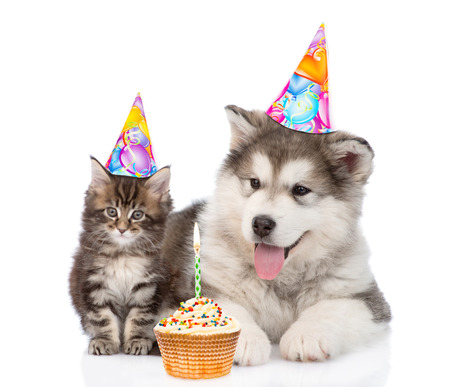 Puppy and kitten in birthday hats. isolated on white background.