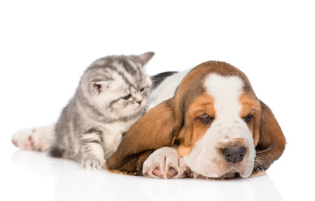 Kitten and puppy lying together. isolated on white background.