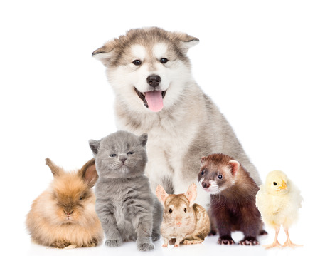 Large group of pets looking at camera. isolated on white background.