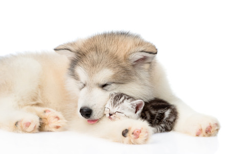 Dog sleeping with cat. isolated on white background.
