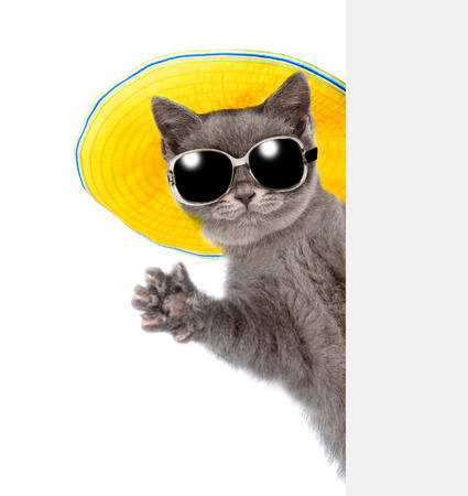 Photo pour Cat in sunglasses and hat peeking from behind empty board and waving his paw. isolated on white background. - image libre de droit