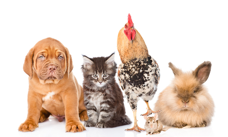 Group of domestic animals and birds. Isolated on white background.