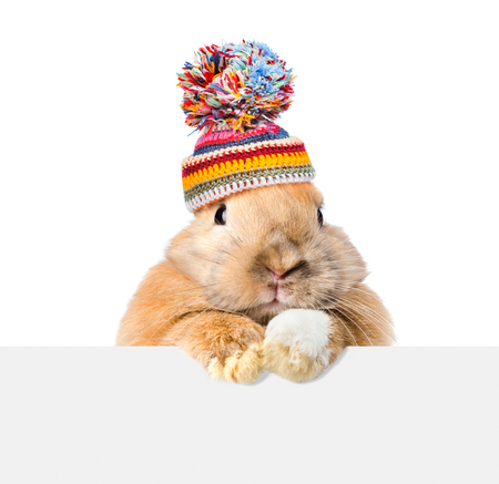 Photo for Rabbit  wearing a warm hat looking over a signboard. Isolated on white background. - Royalty Free Image