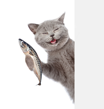 Photo for Happy cat holding a fish in its paw and peeking from behind empty board. isolated on white background. - Royalty Free Image