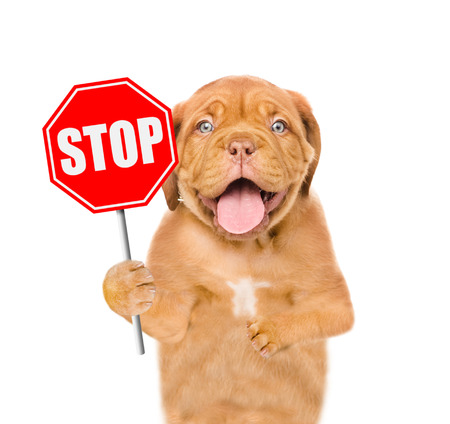 Photo for Dog holding stop sign. Isolated on white background. - Royalty Free Image