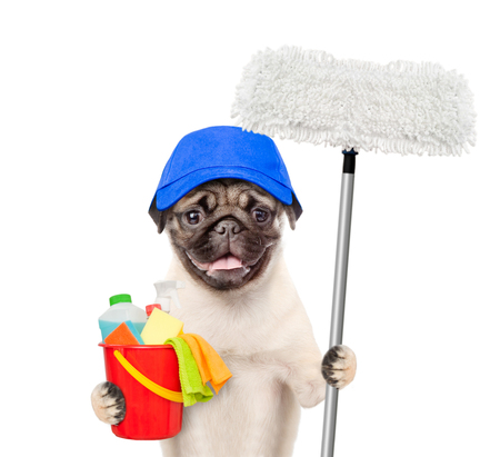Foto de Cleaning concept. Dog in blue hat holds bucket with washing fluids and mop in paw. isolated on white background. - Imagen libre de derechos