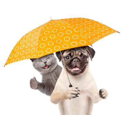 Kitten and puppy with umbrella. isolated on white background.