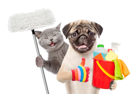 Foto de Cleaning concept. Cat and dog holds bucket with washing fluids and mop in paw and showing thumbs up. isolated on white background. - Imagen libre de derechos
