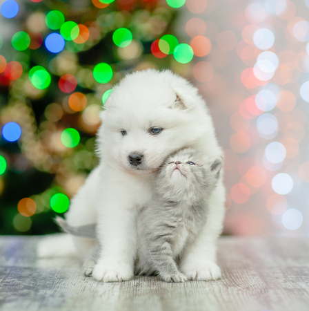 Photo pour Samoyed puppy hugging a tender kitten on a background of the Christmas tree. - image libre de droit