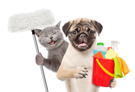 Foto de Cleaning concept. Cat and dog holds bucket with washing fluids and mop in paw. isolated on white background. - Imagen libre de derechos