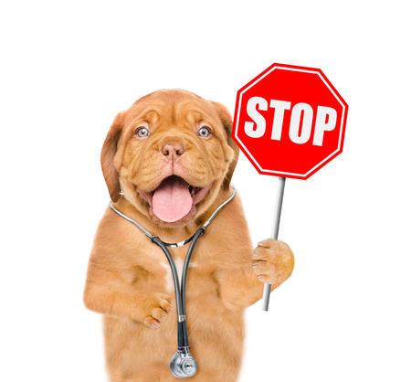 Funny puppy with a stethoscope on his neck and sign stop in paw. isolated on white background.