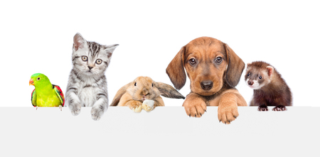 Foto de Group of pets  over empty white banner. isolated on white background. Space for text. - Imagen libre de derechos