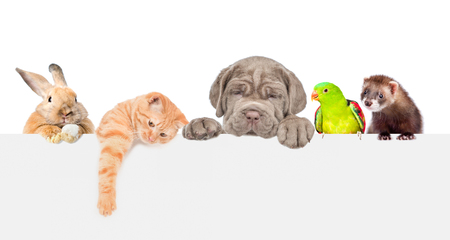 Photo pour Group of pets  over empty white banner. isolated on white background. Empty space for text. - image libre de droit