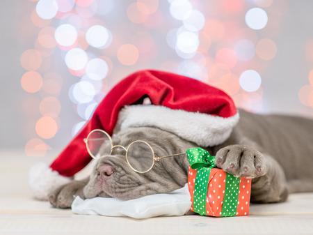 Foto de Mastiff puppy with red santa hat and gift box sleep on festive background. - Imagen libre de derechos