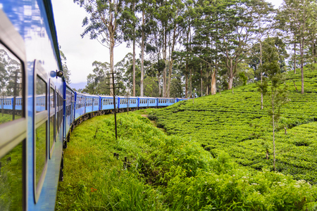Photo pour A train goes through tea plantation in Nuwara Eliya district, Sri Lanka. Tea production is one of the main sources of foreign exchange for Sri Lanka (formerly called Ceylon) - image libre de droit