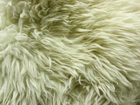 white lamb fur