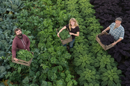 Men and women look to an overhead camera while holding wooden crates containing organic purple kale and other natural produce. They stand in a field with rows of large, bushy plants and fresh vegetables.