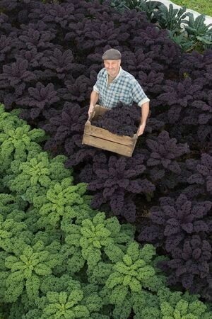 A man in a hat smiles to an overhead camera while holding a wooden crate containing organic purple kale. He stands in a field with rows of large, bushy plants and fresh vegetables.