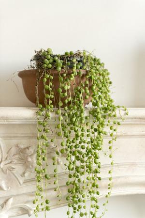 Photo pour String of pearls plant on a fireplace mantel - image libre de droit