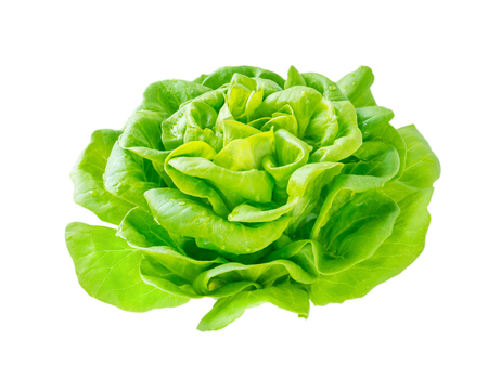 Photo pour Lettuce salad rosette head with water drops side view isolated on white - image libre de droit