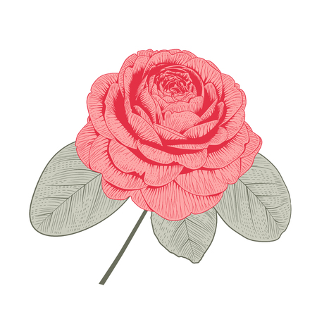 Photo pour Red camellia Japonica rose form flower with leaves hand drawn vector illustration. - image libre de droit
