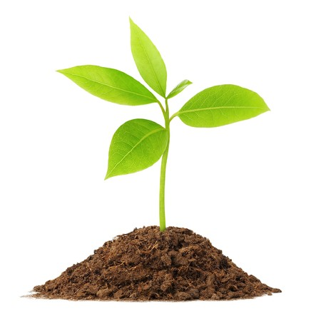 Photo for Young green plant growing from soil - Royalty Free Image
