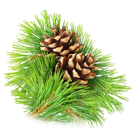 Photo pour Pine branch with cones isolated on white - image libre de droit