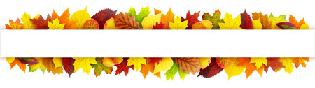 Foto de Colorful autumn leaves banner with clipping path - Imagen libre de derechos
