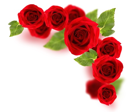 Photo for Fresh red roses border isolated on white background - Royalty Free Image