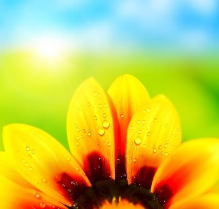 Photo pour Natural colorful  abstract background, wet yellow petals of daisy flower, macro details  - image libre de droit