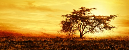 Photo pour Big African tree silhouette over sunset, single tree on the field, beautiful panoramic image of nature at Africa, summer evening peaceful landscape of Masai Mara - image libre de droit