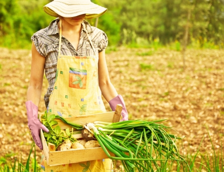 Photo pour Happy woman gardener working on field, young female holding chest, girl growing organic green vegetables and fruits, summer garden, rural leisure outdoor, lady farmer, potato and onion harvest season - image libre de droit
