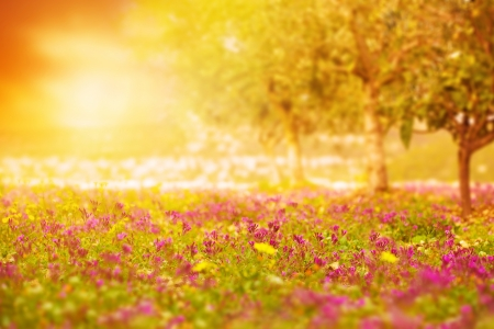 Photo pour Photo of beautiful orange sunset on floral field, bright yellow sun light on glade with fresh pink flowers, blooming rural meadow, purple wildflower, spring nature, gentle landscape, springtime  - image libre de droit