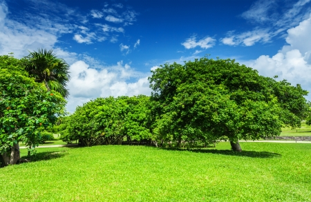 Foto de Beautiful landscape, blue cloudy sky, green grass field, leafy trees, sunny day, good weather, spring nature concept - Imagen libre de derechos