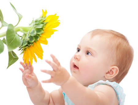 Photo for Cute baby with sunflower isolated on white background, adorable curious little girl exploring big yellow flower - Royalty Free Image