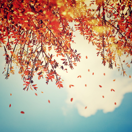 Photo pour Beautiful vintage autumn background, autumnal tree border with falling down old leaves over blue cloudy sky, abstract natural background, nature at fall - image libre de droit