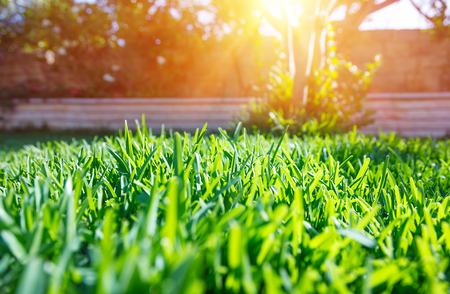 Photo for Beautiful view on cute backyard in sunny day, fresh green grass lawn in sunlight, landscaping in the garden, beauty of summer season - Royalty Free Image