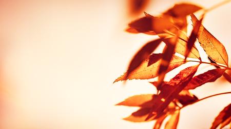 Photo pour Dry autumn leaves border over beige background, old grunge orange foliage, change of nature, photo with copy space, fall season concept - image libre de droit
