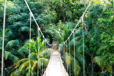 Foto de Jungle rope bridge hanging in rainforest of Honduras on natural green background. Wildlife and nature. Travel and adventure concept - Imagen libre de derechos