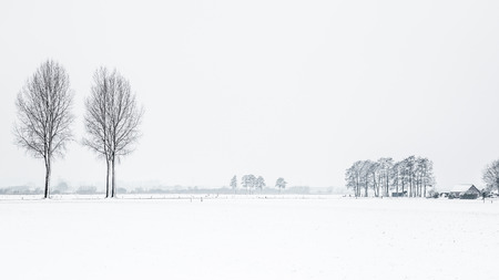 Photo for Dutch snow landscape with trees - Royalty Free Image